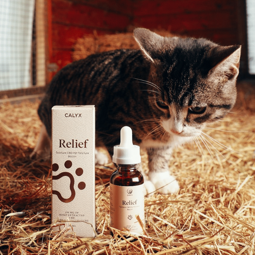 3 Important Things You Need to Know when Offering CBD Oil Cat Treats